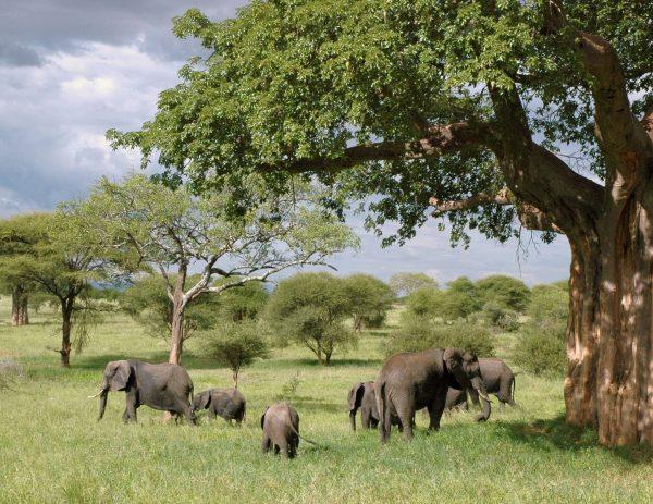 elephants at the aberdare