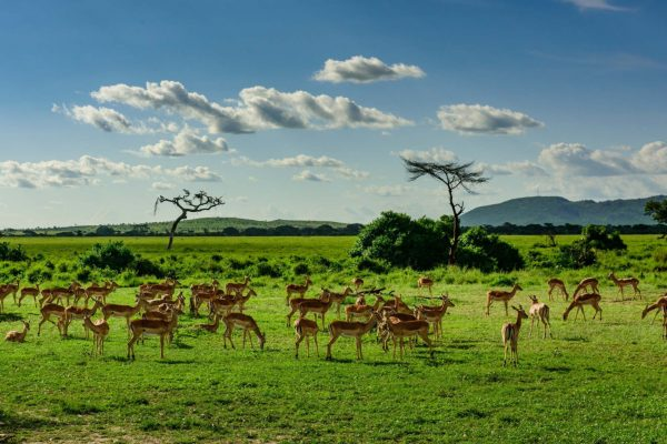 Samburu plains
