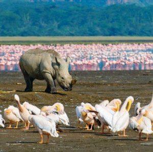 Rhino and Flamingoes