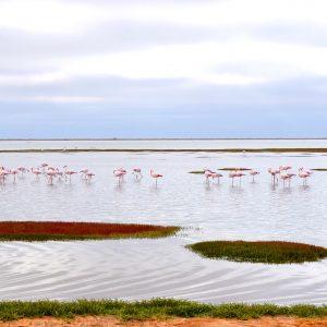 Lake Baringo Flamingo
