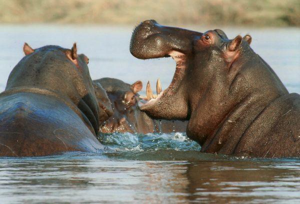 Lake Baringo wildlife