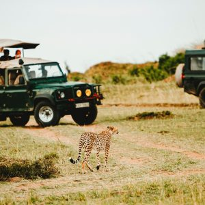 The Lions of Mara