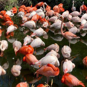 Birds of Lake Bogoria