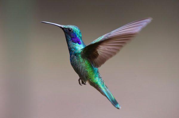 Birdie of Bogoria