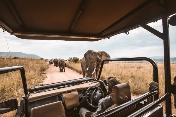 Meet the elephants