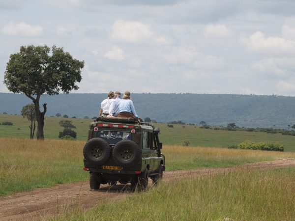 Game drive in the wild