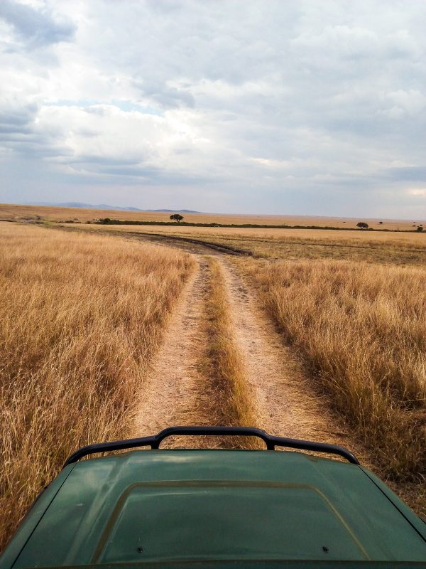Plains of the mara