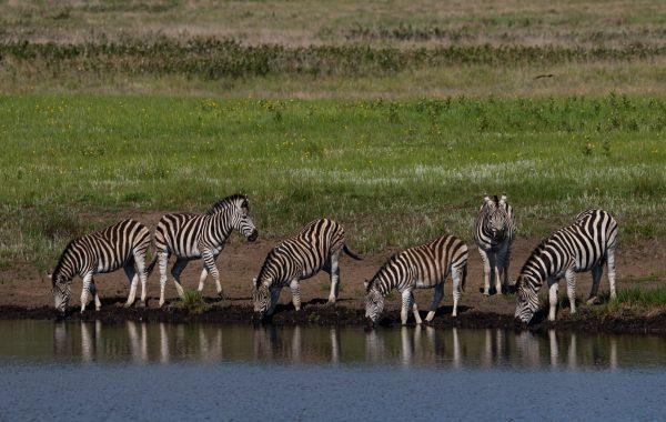 Lake Mburo wildlife